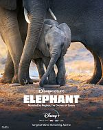 Elephant - FRENCH HDRip